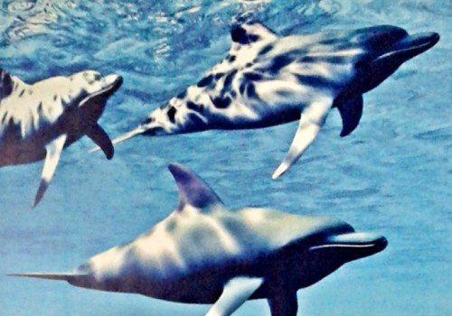Delfin zamknięty. Trwa remont generalny zjeżdżalni
