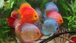 ryby palmiarnia gliwice