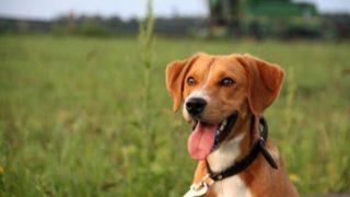 Poprzedni właściciele wyrzucili psa z samochodu. Lulek