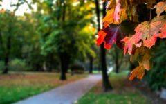 Poczatek astronomicznej Jesieni juz jutro