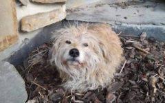 zaginiony pies gliwice