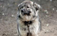 zakaz trzymania psow na lancuchu