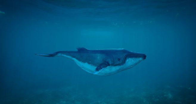 niebieski-wieloryb-gliwice