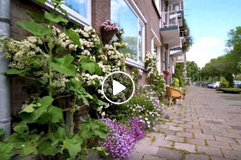 Ogródki fasadowe odpowiedzią na zmiany klimatu