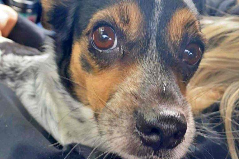 Interwencja OTOZ. Pies jadł zgniłe mięso, obok leżały zwłoki